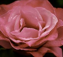 Raindrops on Roses by AnnabelHC