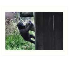 Hanging On 2 - Gorilla Infant at play photo / print / animal /wildlife Art Print