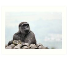 Pondering - Gorilla Photo / Print - Amazing Animal Photo Art Print