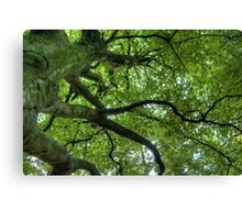 Staring Up - Lovely Photo Of Tree Branches - Nature Print Canvas Print