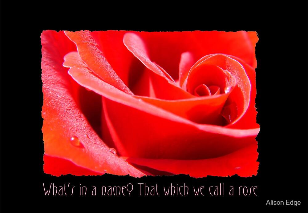 Valentine Rose by Alison Edge