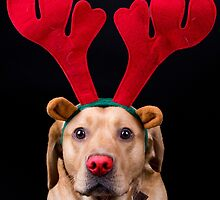 Scooby the red nosed doggy by wendywoo1972