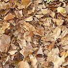 autumn leaves on the ground by Iani