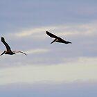 In  Flight by RipleyDigital