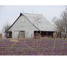 White Barn Purple field Photographic Print
