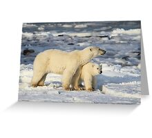 Standing Guard Over Her Cub, Churchill, Canada  Greeting Card