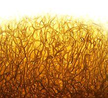 Sea Sponge by RLHall