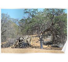 picture like California dry mountain and trees. Landscape photography. Poster