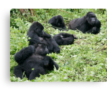 Mountain Gorillas Canvas Print
