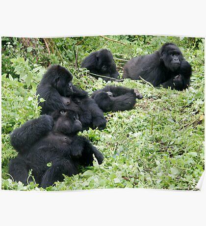Mountain Gorillas Poster