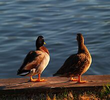 ducks in a row by lindseychase06