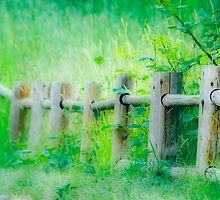 The Fenceline by Diane Dority