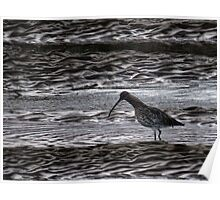 Curlew Poster