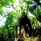 Old Tree by Jarrod Lees