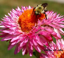 STRAWFLOWER DINER by Madeline M  Allen