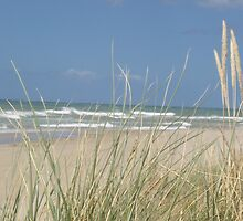 pampas grass barrier  -  -  sunny beach day - at Somerset beach by gaylene