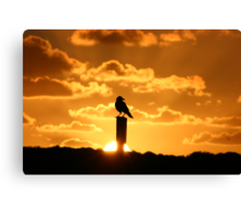 A sunset to crow about Canvas Print