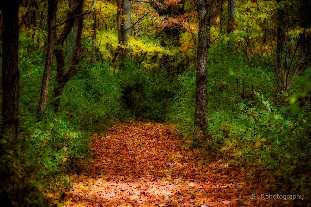 Fall walk in the woods by KSKphotography