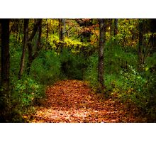 Fall walk in the woods Photographic Print