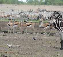 Namibian Zebras don't need dentists by lordploppy
