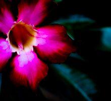 Sabi Star by photogurl