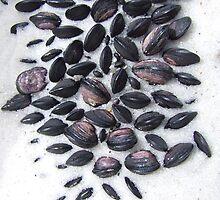 Little Mussels by Samara  Lee