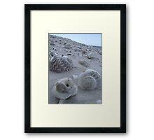 Shell Seeker Framed Print