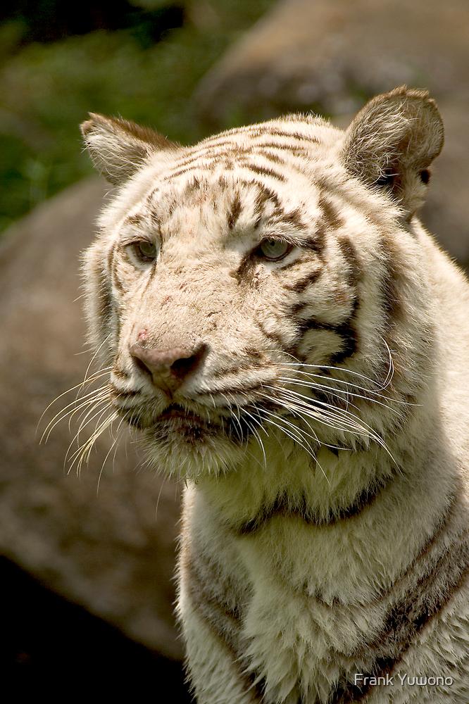 White Tiger by Frank Yuwono