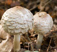 fungi by Ken McKillop