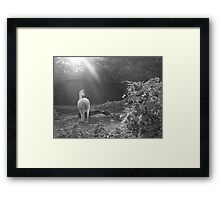 Walk Proud like a Lama  Framed Print