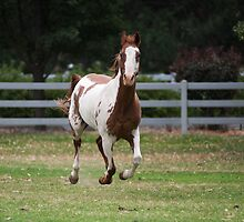 Running horse. by Steve Mills