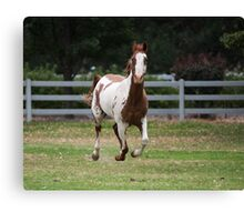 Running horse. Canvas Print