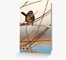 Song Sparrow at Marina Greeting Card