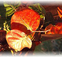 Sea Grape Leaves by Judy Gayle Waller