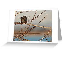 Song Sparrow Blue Sky Greeting Card