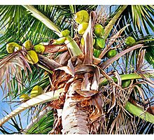 Coconut Palm Photographic Print