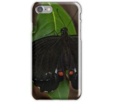 Male Orchard Swallowtail Butterfly iPhone Case/Skin