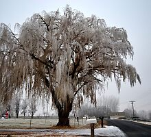Winter willow tree by moregoodart