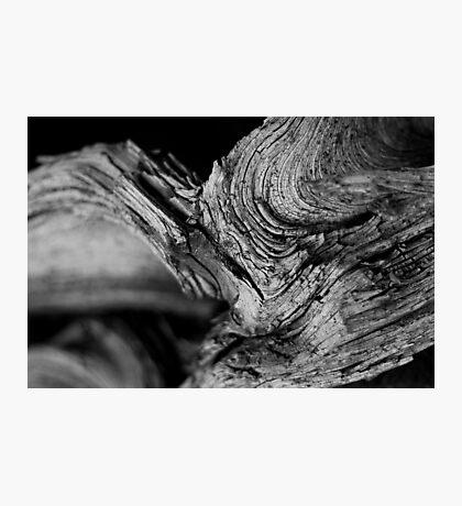Ancient History Photographic Print