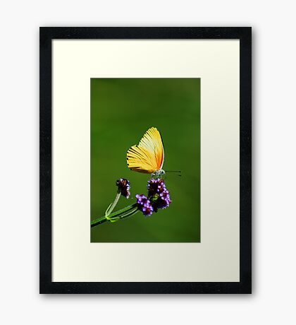 colours in nature Framed Print