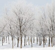 Woods in Rime by bluerabbit