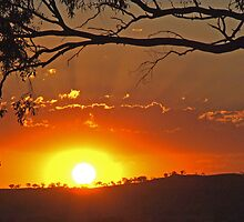 Cootamundra Sunset by GailD