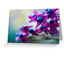 Harlequin Glorybower Greeting Card