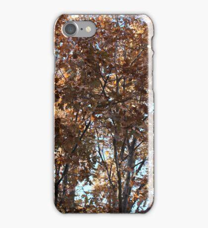 Oak Tree, December, Midwestern USA iPhone Case/Skin