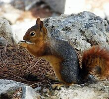 Squirrel Theatre by Alan Ralph