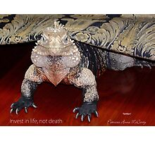 """THINK LIZARDS: """"Invest in life, not death"""" Photographic Print"""