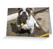 Doggie Facial Greeting Card