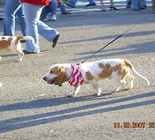 Bassett Hounds on Parade(Dog) by Cathy Cale