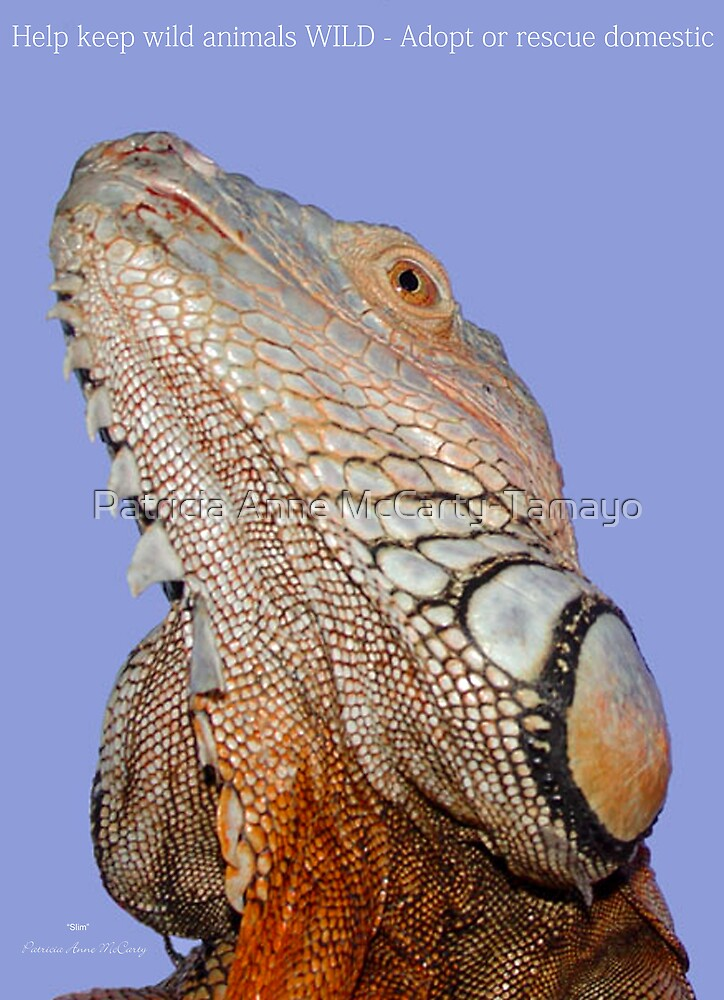"""THINK LIZARDS: """"Help keep wild animals WILD- Adopt or Rescue domestic"""" by Patricia Anne McCarty-Tamayo"""