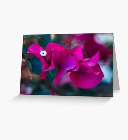 A Tiny White Flower Greeting Card